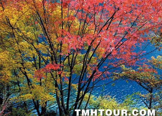 到天目湖赏秋色山水,去南山竹海做快乐老人,让你的金秋之旅不留遗憾.