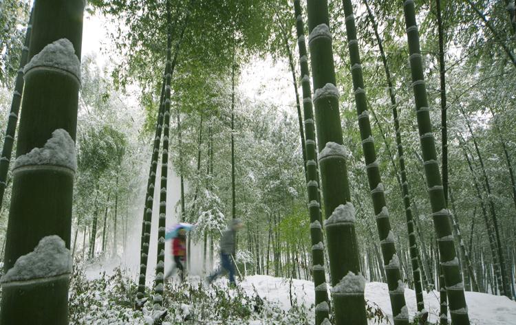 南山竹海景区万亩翠竹被雪覆盖,一派银装