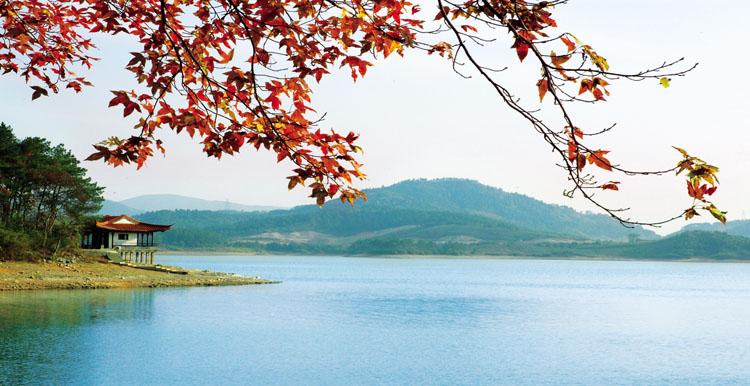 清晨薄雾中的南山竹海,熊猫馆悠然散步的熊猫,天目湖畔的茶语清香,御