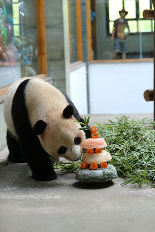 南山竹海熊猫生日