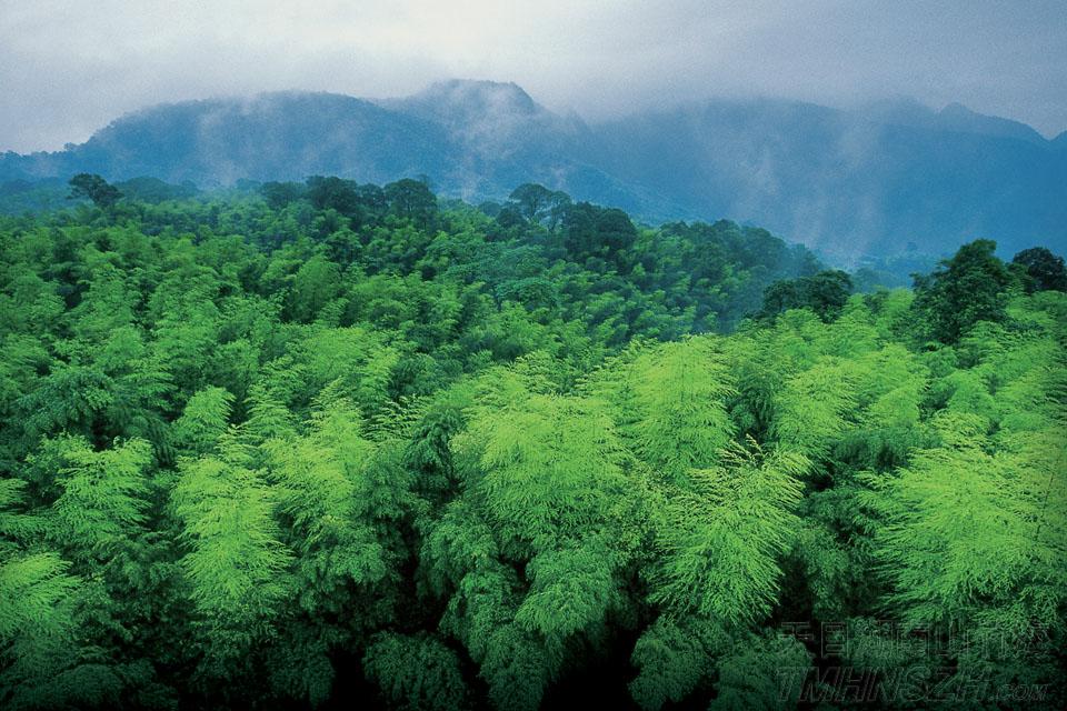 穿越一片竹海天堂