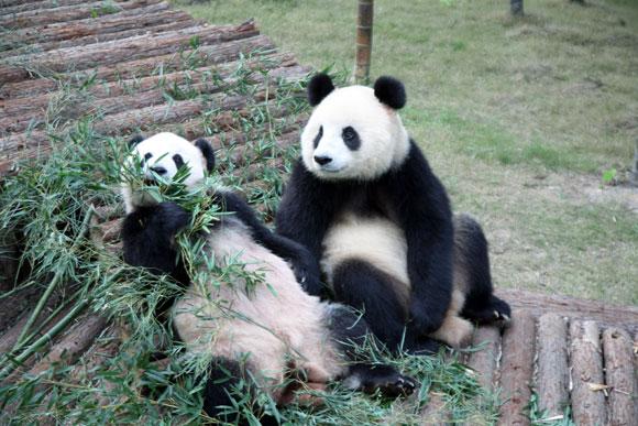 南山竹海熊猫馆